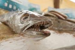πάγος ψαριών Στοκ Εικόνες