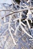 πάγος 3 κλάδων Στοκ εικόνα με δικαίωμα ελεύθερης χρήσης