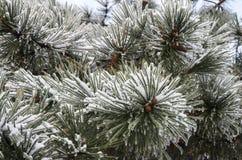 Πάγος azhur Στοκ εικόνες με δικαίωμα ελεύθερης χρήσης