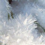 Πάγος Gras behinde Στοκ Φωτογραφίες