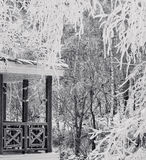 πάγωμα ημέρας Στοκ Φωτογραφίες