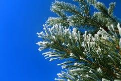 Πάγωμα του δέντρου έλατου Στοκ Εικόνες