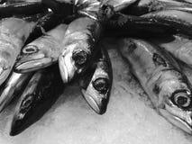 Πάγωμα των ψαριών στον πάγο στοκ φωτογραφίες με δικαίωμα ελεύθερης χρήσης