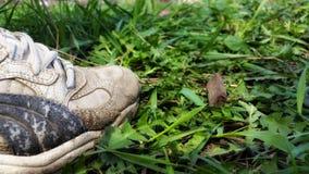 Πάνινα παπούτσια στη χλόη Στοκ εικόνα με δικαίωμα ελεύθερης χρήσης