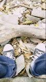 πάνινα παπούτσια στοκ εικόνα