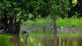 Πάπια που κολυμπά στη λίμνη και τη μύγα πουλιών πέρα από τη λίμνη απόθεμα βίντεο