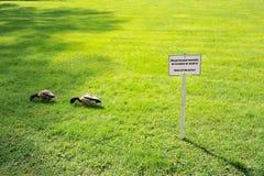 Πάπια που περπατά στη χλόη - το σημάδι Στοκ Φωτογραφία