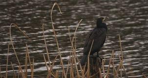 Πάπια στο πάρκο κοντά στη νεφελώδη ημέρα λιμνών απόθεμα βίντεο
