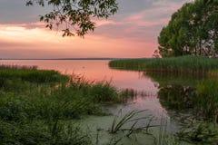 Πάπια στο ροδαλό νερό Στοκ εικόνα με δικαίωμα ελεύθερης χρήσης