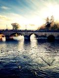 Πάπιες που κολυμπούν στον ποταμό Τάμεσης στοκ φωτογραφίες