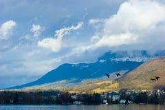 πάπιες που πετούν τη λίμνη στοκ εικόνες
