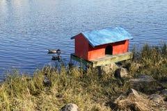 Πάπιες σπιτιών Στοκ Φωτογραφίες