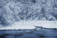 Πάπιες στη λίμνη το χειμώνα Στοκ εικόνα με δικαίωμα ελεύθερης χρήσης