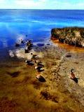 Πάπιες στη βόρεια Καρολίνα παπιών Στοκ Εικόνες
