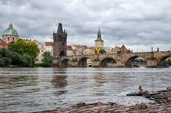 Πάπιες στον ποταμό Vltava στη γέφυρα του Charles υποβάθρου Στοκ Εικόνα