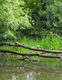 Πάπιες στο νερό Στοκ φωτογραφία με δικαίωμα ελεύθερης χρήσης