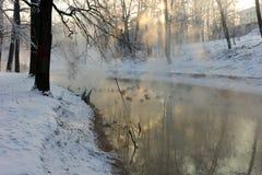 Πάπιες το χειμώνα Στοκ εικόνες με δικαίωμα ελεύθερης χρήσης