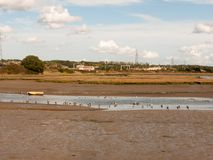 Πάπιες Wading στις χήνες τοπίων ρευμάτων ποταμών εκβολών παλίρροιας έξω Στοκ Φωτογραφία