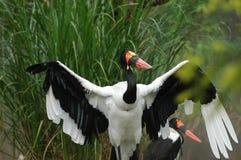 πάρκα φύσης πουλιών Στοκ Φωτογραφίες