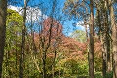 Πάρκα Scotlands και χρυσά χρωματισμένα χαλκός δέντρα Lucious στοκ φωτογραφία με δικαίωμα ελεύθερης χρήσης