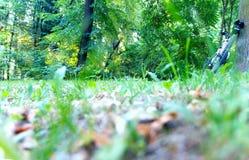 Πάρκο, δάσος, ποδήλατο Στοκ Εικόνα
