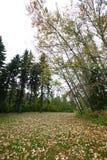 Πάρκο Έντμοντον Hawrelak Στοκ φωτογραφία με δικαίωμα ελεύθερης χρήσης