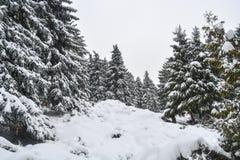 Πάρκο αποκλεισμένο από τα χιόνια Στοκ Φωτογραφίες