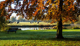 Πάρκο από τον ποταμό μεγάλο Ouse Στοκ φωτογραφία με δικαίωμα ελεύθερης χρήσης