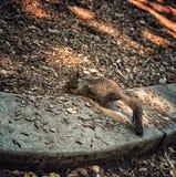Πάρκο βράχου στυπτηριών στοκ εικόνες