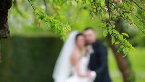 Πάρκο γαμήλιας φύσης άνοιξη απόθεμα βίντεο