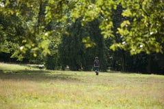 Πάρκο, Γλασκώβη, Σκωτία, Ηνωμένο Βασίλειο, το Σεπτέμβριο του 2013, parkland και δέντρο Kelvingrove στο πάρκο Kelvingrove στοκ εικόνες