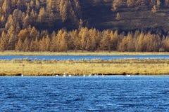 Πάρκο εθνικών δρυμός βουνών Arxan Στοκ Εικόνες