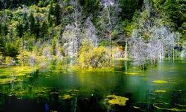 Πάρκο εθνικών δρυμός της Κίνας Στοκ Εικόνα
