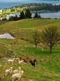 πάρκο ελαφιών Στοκ Φωτογραφίες