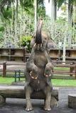 Πάρκο ελεφάντων κοντά σε Ubud, Μπαλί Στοκ εικόνες με δικαίωμα ελεύθερης χρήσης