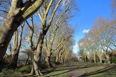 Πάρκο επισκόπων κατά μήκος του ποταμού Τάμεσης το χειμώνα, Fulham, δήμος Hammersmith και Fulham, Λονδίνο, UK Στοκ Εικόνες