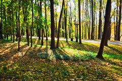 πάρκο ηλιόλουστο στοκ εικόνα
