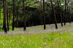 Πάρκο κέδρων Στοκ Εικόνες