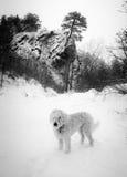 Πάρκο κοιλάδων κολπίσκου ελαφιών το χειμώνα Στοκ Φωτογραφίες