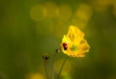 Πάρκο κοιλάδων Sanwell στοκ εικόνα με δικαίωμα ελεύθερης χρήσης