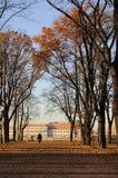 πάρκο λεωφόρων φθινοπώρο&upsil Στοκ εικόνα με δικαίωμα ελεύθερης χρήσης