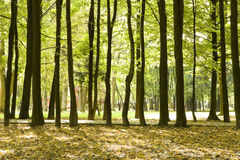 πάρκο λεωφόρων Στοκ Φωτογραφία