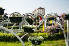 Πάρκο λουλουδιών στο Γκρόζνυ Στοκ φωτογραφία με δικαίωμα ελεύθερης χρήσης