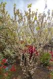 Πάρκο λουλουδιών Ashikaga, διάσημος προορισμός ταξιδιού στην Ιαπωνία Ζωηρ στοκ φωτογραφίες