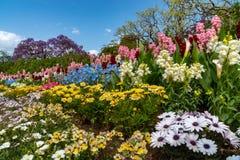 Πάρκο λουλουδιών Ashikaga, διάσημος προορισμός ταξιδιού στην Ιαπωνία Ζωηρ στοκ φωτογραφίες με δικαίωμα ελεύθερης χρήσης