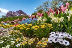 Πάρκο λουλουδιών Ashikaga, διάσημος προορισμός ταξιδιού στην Ιαπωνία Ζωηρ στοκ εικόνες