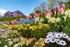 Πάρκο λουλουδιών Ashikaga, διάσημος προορισμός ταξιδιού στην Ιαπωνία Ζωηρ στοκ εικόνες με δικαίωμα ελεύθερης χρήσης