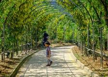 Πάρκο λουλουδιών Ashikaga σε Tochigi, Ιαπωνία στοκ εικόνα