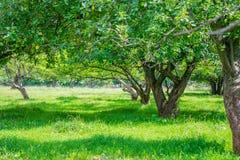 Πάρκο με τα δέντρα στην άνθιση Στοκ εικόνες με δικαίωμα ελεύθερης χρήσης