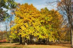 Πάρκο με τα κάστανα φθινοπώρου Στοκ φωτογραφία με δικαίωμα ελεύθερης χρήσης